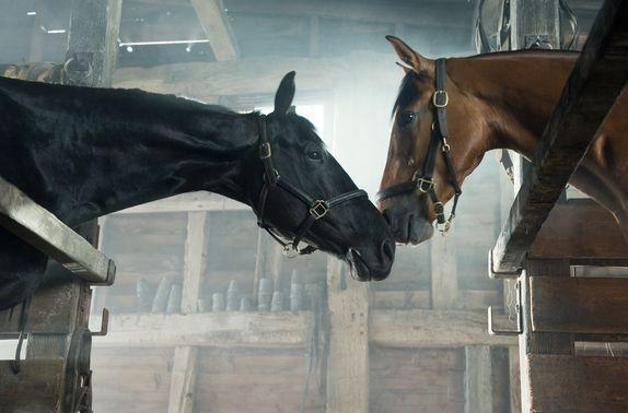 ジョーイと仲良しの黒馬。かわいい。