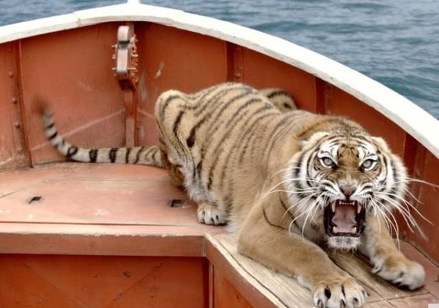 たぶんこれは本物だが、なんであろうとトラはかっこいい